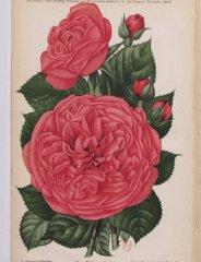 philemon-cochet-1895-11