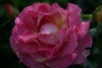 pink-paradise