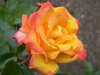 redgold-1.jpg