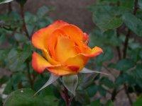 redgold-2.jpg