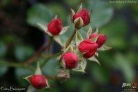 fairy-bouquet