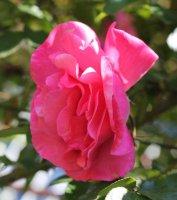 rosanna-2