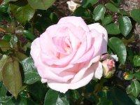 pink-promise1.jpg
