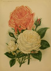 madame-lacharmegardenillustrate1076lond_0657
