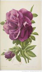 roseraie-lhay