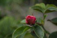 simple-peach-2