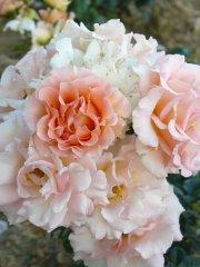roses_lyonnaises-jean_de_luxembourg_roi_de_boheme