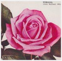 tyriana