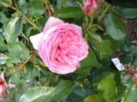 la-rose-de-molinard