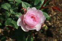olivia-rose-austin-a