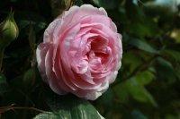 olivia-rose58