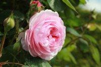olivia-rose9