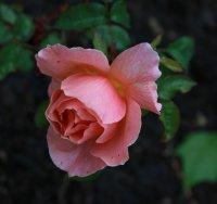 fragrant-delight