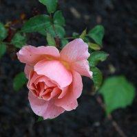 fragrant-delight2