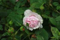 lady-salisbury2