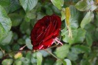 red-abundance