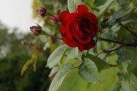red-abundance2