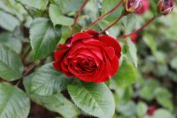 red-abundance3