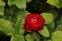 red-abundancew