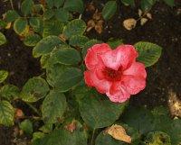 alissar-princesse-of-phenicia