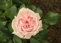 garden-of-roses2