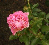 pink-paradise8