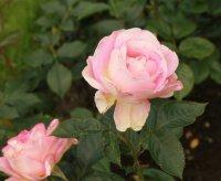 pink-paradise9