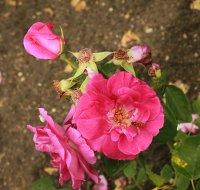 pink-piano-546