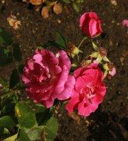 pink-piano547