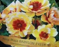 babylon-eyes