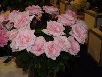 pink-o-hara3