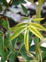 a-feuilles-de-chanvre-a.jpg