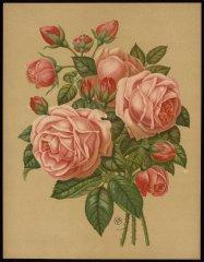 le-princess-louise-victoria-livre-dor-des-roses-paul-hariot-1903_