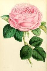 la-france-floralmagazine