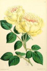 madame-margottin-floralmagazineco