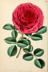 marqiuse-de-castellane-floralmagazine