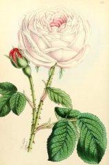 miss-ingram-floralmagazine