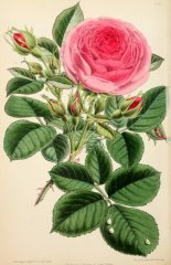 princess-louise-victoria-floralmagazinec