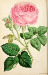 souv-de-mons-poiteau-floralmagazinec