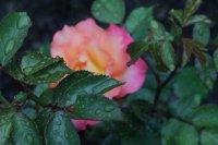 rainbow-sorbet