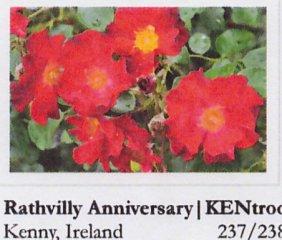 rathvilly-anniversary-hradec-kralove-16