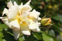 clos-fleuri-jaune