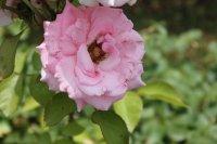 clos-fleuri-rose-7