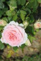 clos-fleuri-rose-9