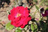 clos-fleuri-rouge