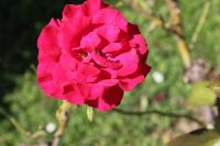 clos-fleuri-rouge2