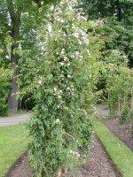 rosa-filipes-rehderwilson-2a.jpg