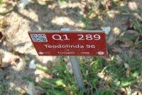 teodolinda2