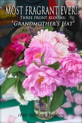 grandmothers-hat