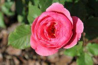 gartenprintzesin-marie-jose